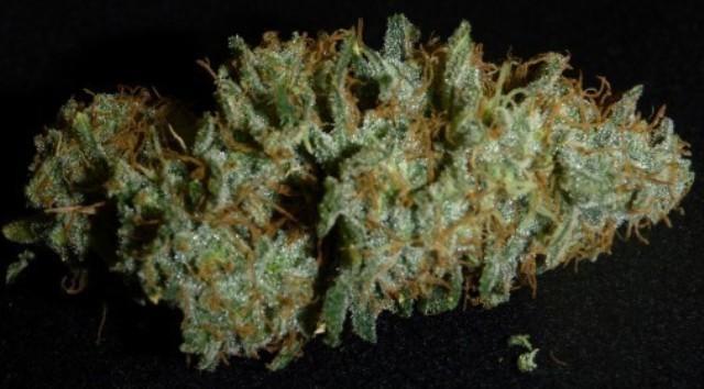 HOG Organic weed