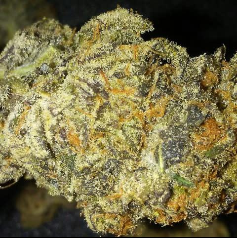 Purple Punch Marijuana Strain