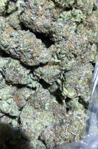 OG Shark Marijuana Strain
