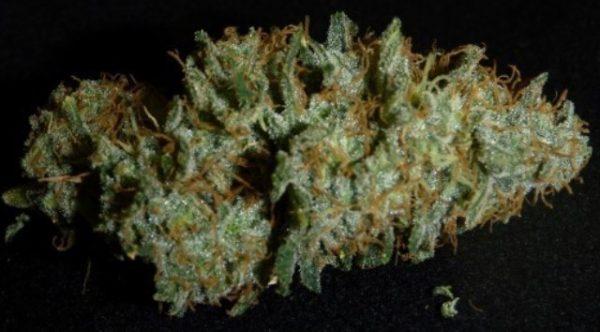 Buy HOG Organic weed