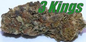 3 Kings Sativa Strain