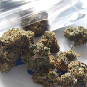 Buy Blue Cookies Weed Strain