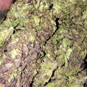 Buy Blueberry Muffin Marijuana Strain