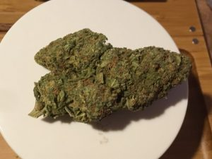 Blueberry Muffin Weed Strain