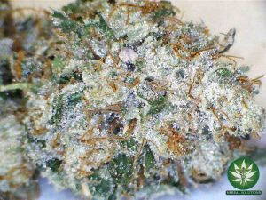 Buy Death Star Weed Strain