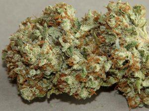 Buy Death Star Marijuana Strain