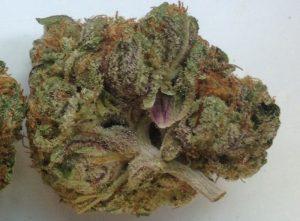 Emperor Cookie Dough Marijuana