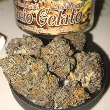 Buy Gelato Marijuana Strain