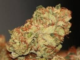 Buy Hindu Kush Marijuana Strain