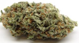 Buy Ice Wreck Weed Strain
