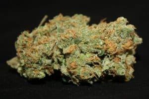Lemon Thai Marijuana Strain