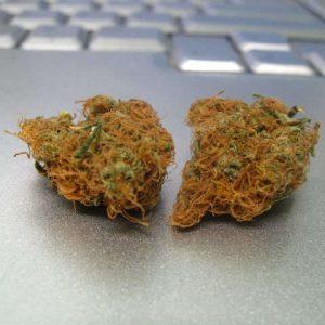 Nova OG Marijuana strain