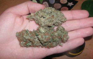 Buy Skywalker OG Marijuana Strain