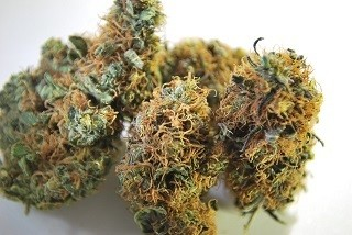Buy Sour Tsunami Strain
