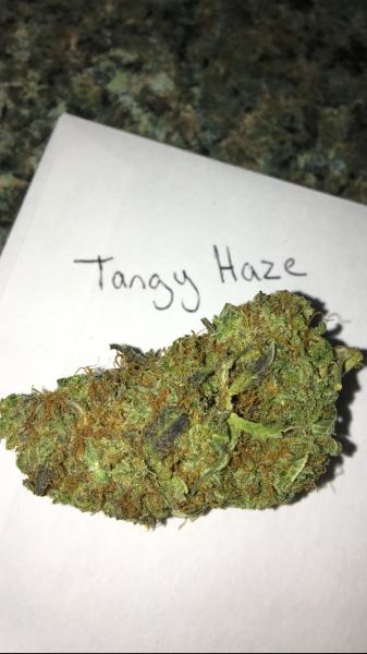 Buy Tangerine Haze Weed