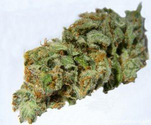 Buy Casey Jones Weed
