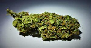 Buy Critical OG Weed Strain