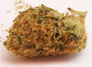 Buy Golden Kush Strain