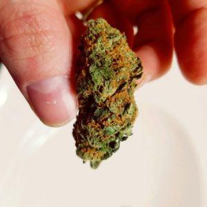 Jet Fuel Marijuana Strain