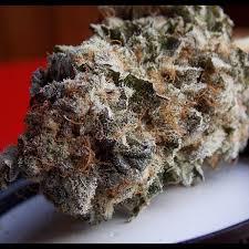 Jilly Bean Marijuana Strain
