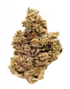 Buy Scout's Honor Strain