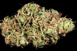 Silver n Gold Marijuana