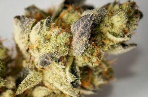 Buy SinMint Weed Strain