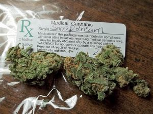 Snoop's Dream Marijuana Strain
