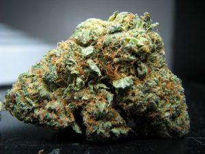 Timber Kush Cannabis Strain