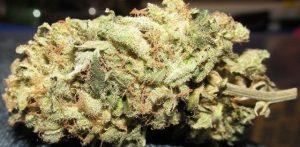 Buy Underdog OG Marijuana