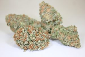 Blue Cheese Weed Strain