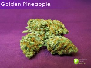 Golden Pineapple Marijuana Strain