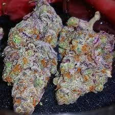 Buy Sunset Sherbet Strain