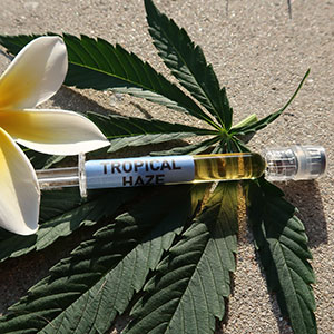 CO2 Extracted Cannabis Oil
