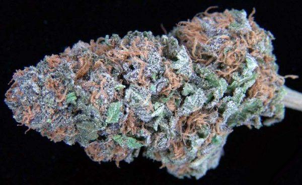 Lavender Cannabis
