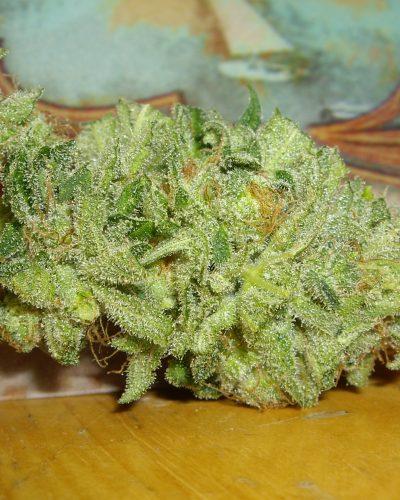 Chemdog 91 Kush